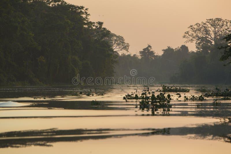 Árboles y selva en el río de Catatumbo, el lago de Maracaibo, Venezue foto de archivo libre de regalías