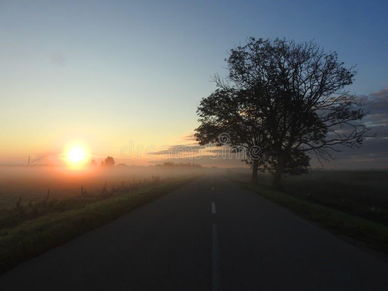 Árboles y sol por mañana, Lituania imágenes de archivo libres de regalías