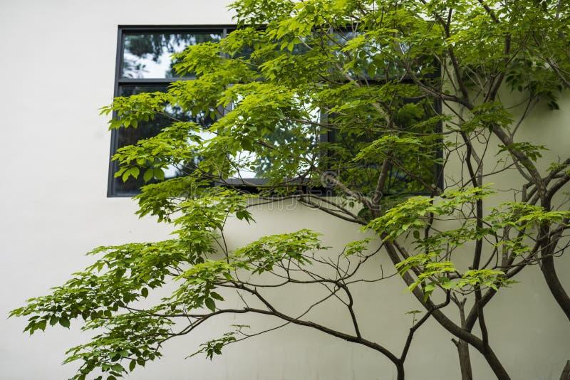 Árboles y troncos fuera de la ventana foto de archivo