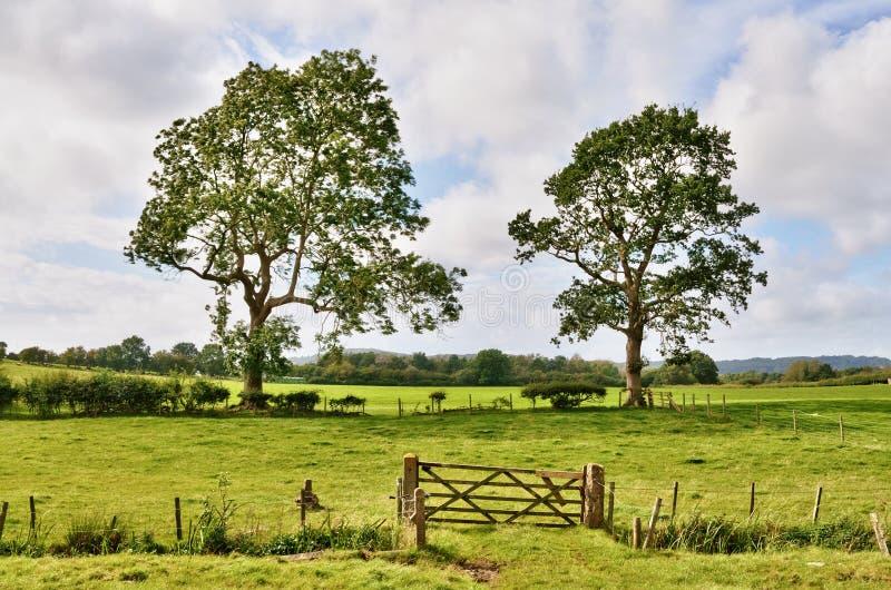 Árboles y una puerta del campo en paisaje inglés rural fotos de archivo libres de regalías