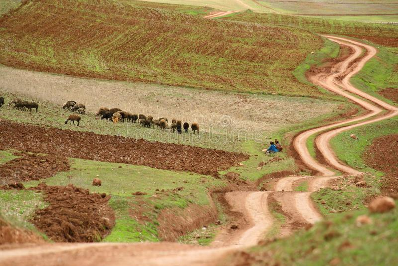 Área da agricultura da calha da passagem da estrada do ziguezague de povos do Inca, Cusco, Peru fotografia de stock royalty free