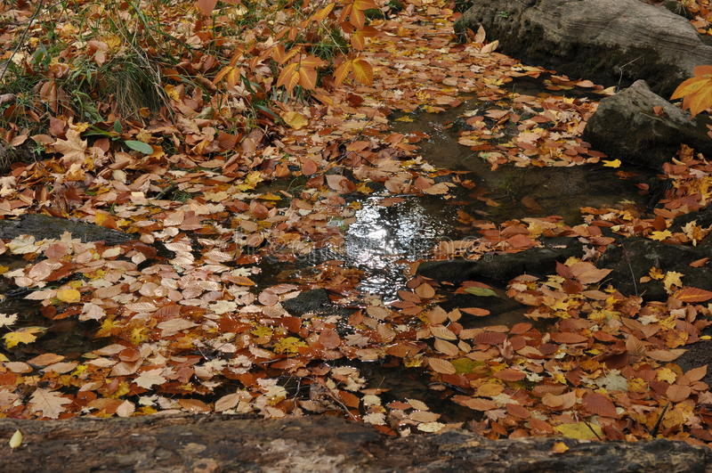 Área da conservação do cársico de Eramosa - 26 de outubro de 2014 fotografia de stock royalty free
