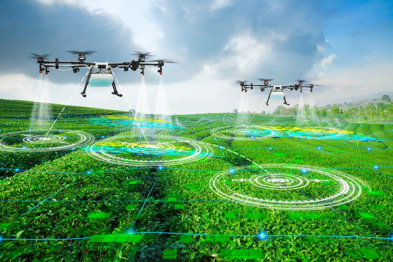 Área de exploración del abejón de la agricultura al fertilizante rociado en campos del té verde, granja elegante 4 de la tecnolog imagenes de archivo