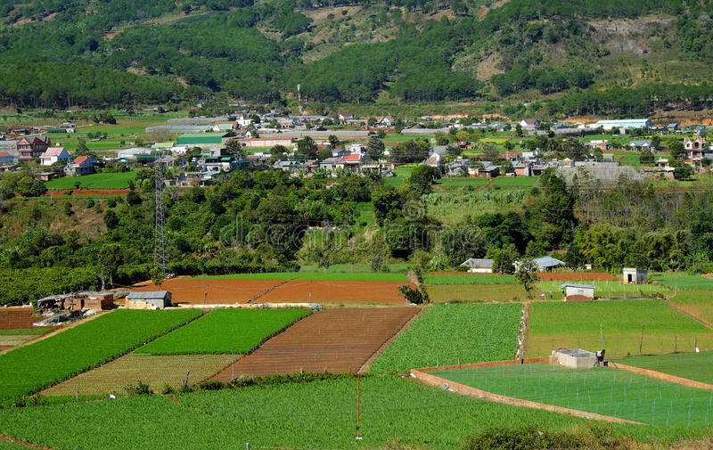 Área de la agricultura, Dalat, Vietnam, campo, granja vegetal imágenes de archivo libres de regalías