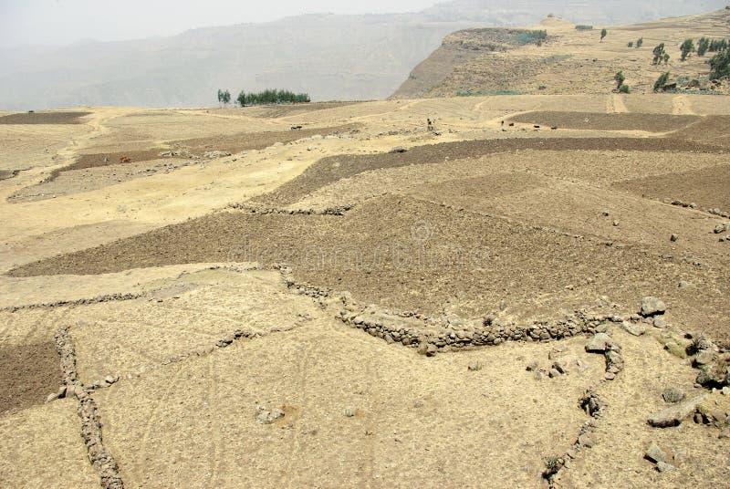 Área de la agricultura - Etiopía imagen de archivo libre de regalías
