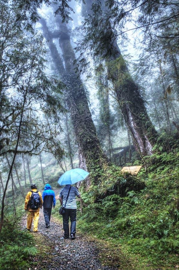 Área de reconstrucción del bosque de Cilan en Yilan Taiwán fotografía de archivo