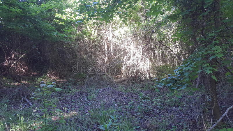 A área de videiras ensolarados e as árvores novas dentro dos animais selvagens arrastam fotografia de stock