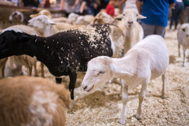 Área do jardim zoológico de trocas de carícias do jardim zoológico do condado do LA foto de stock royalty free