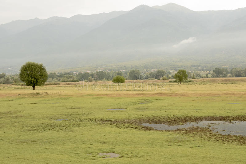 Área do lago Kerkini, Grécia fotos de stock royalty free