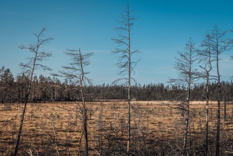 Área do pântano na Suécia foto de stock