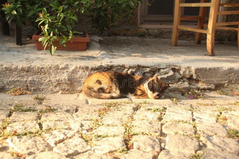 Área egea - isla de Tenedos, gato el dormir fotografía de archivo