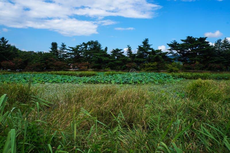 ?rea esc?nica de la charca de gyeongju de la Corea del Sur fotografía de archivo