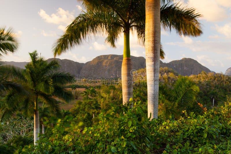 Área famosa do cigarro da terra de Cuba no por do sol, Vale de Vinales, C imagem de stock