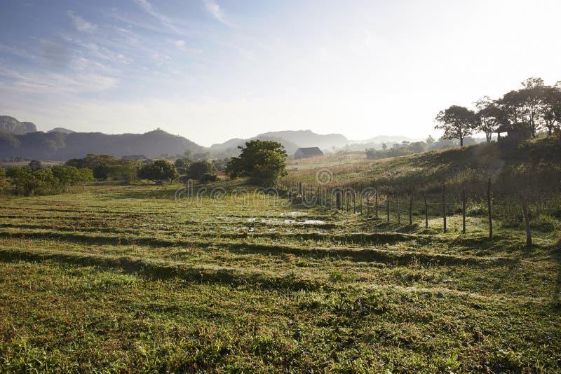 Área famosa do cigarro da terra de Cuba no por do sol, Vale de Vinales, fotografia de stock