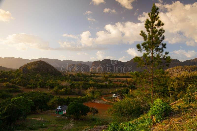Área famosa do cigarro da terra de Cuba no por do sol, Vale de Vinales, C imagens de stock royalty free