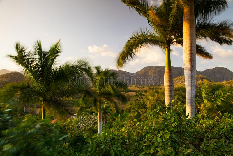 Área famosa do cigarro da terra de Cuba no por do sol, Vale de Vinales, C fotografia de stock royalty free