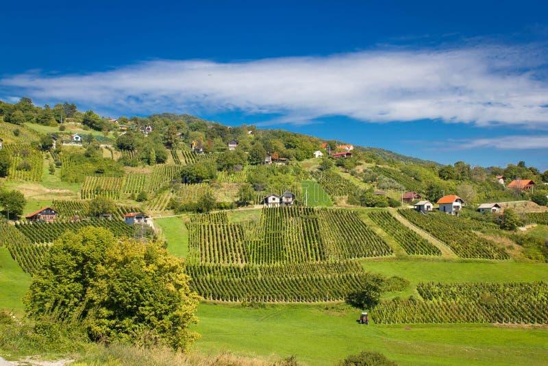 Área idílico dos vinhedos do monte verde fotografia de stock royalty free