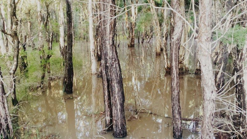 Área inundada foto de archivo libre de regalías