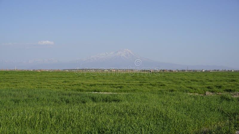 Área rural na frente da montanha no horizonte imagens de stock royalty free