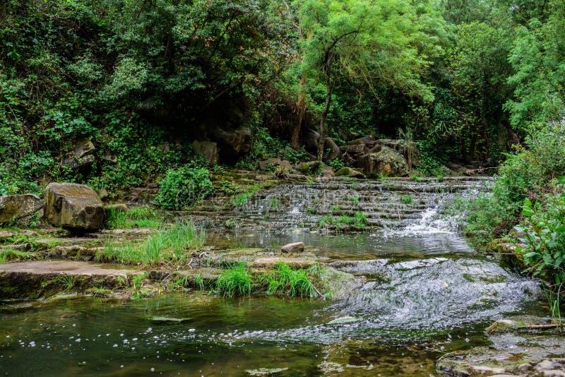 Área silvestre con la corriente de la vegetación del río de Mourão, densa y pura, Anços - Sintra, Portugal imagen de archivo