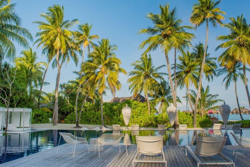 Área tropical da piscina bonita com cadeiras e palmeiras de praia em Maldivas foto de stock royalty free