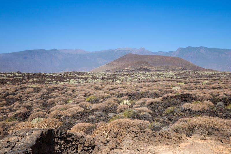Área vulcânica com as plantas suculentos da ilha de Tenerife, canário, Espanha fotos de stock