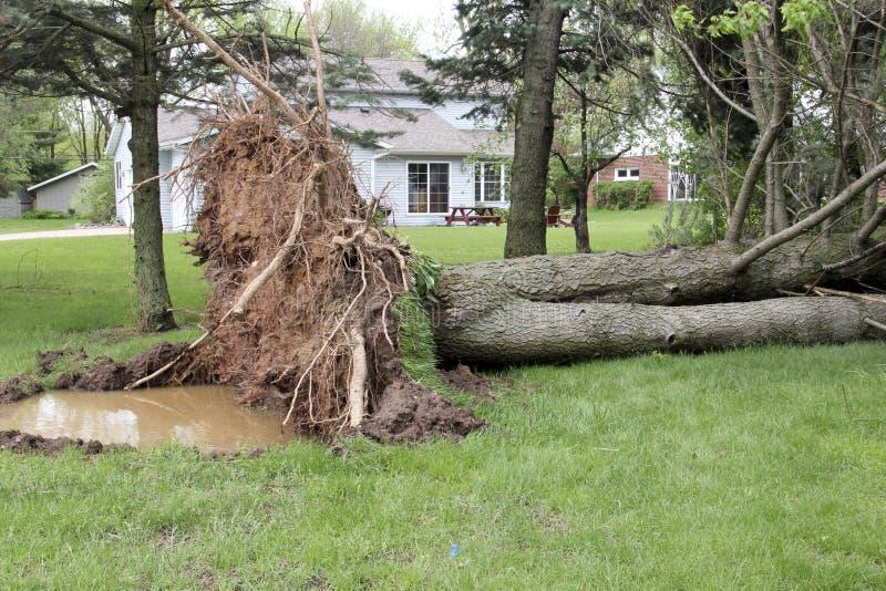 A árvore é para baixo de uma tempestade do vento fotos de stock royalty free