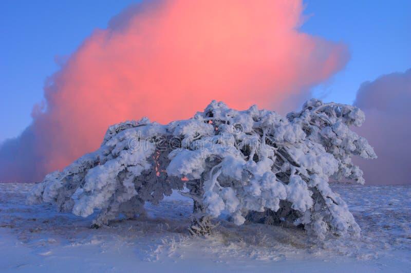 Download Árvore foto de stock. Imagem de nuvem, azul, monte, declínio - 12802476