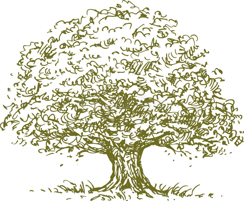 Árvore ilustração do vetor