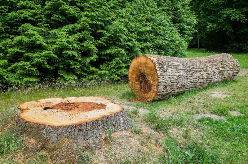 Árvore abatida fotografia de stock