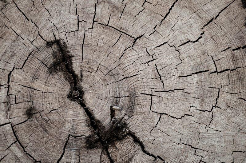 Árvore abatida imagem de stock