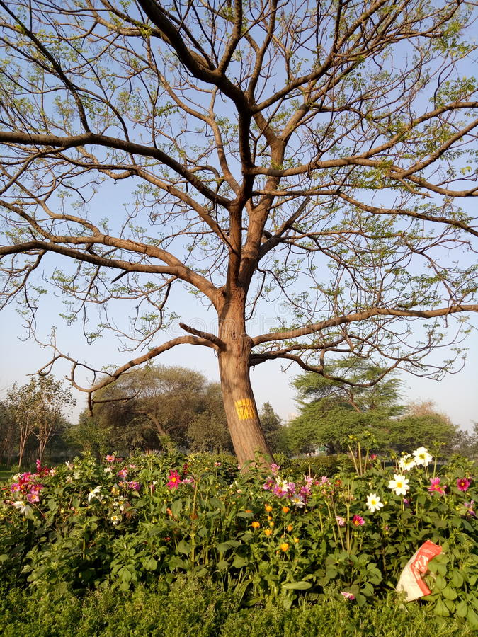 Árvore agradável imagem de stock
