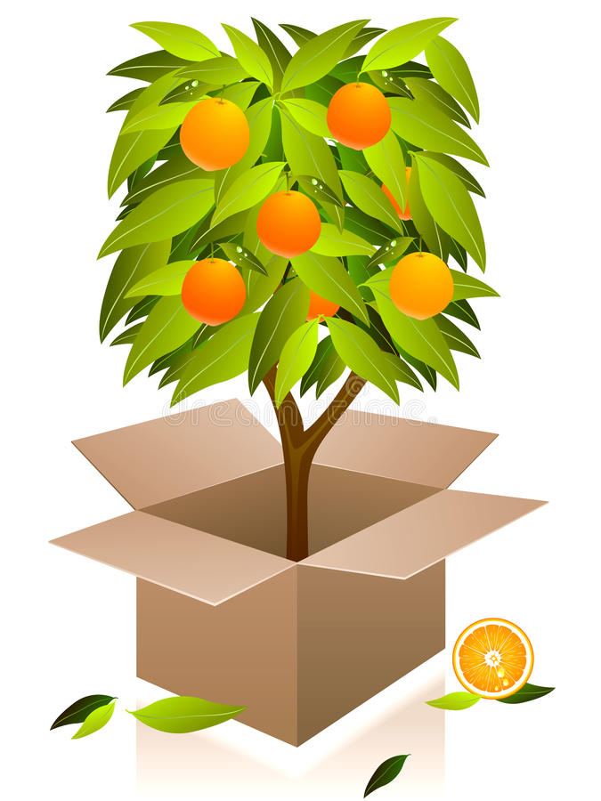 Download Árvore Alaranjada Do Vetor. Ilustração do Vetor - Ilustração de fresco, clipping: 10057386