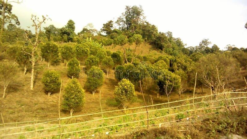 Árvore alaranjada em Samdrupjongkhar imagens de stock royalty free