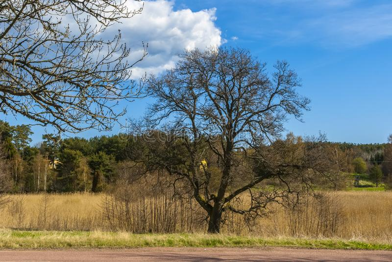 Árvore alastrando bonita fotos de stock