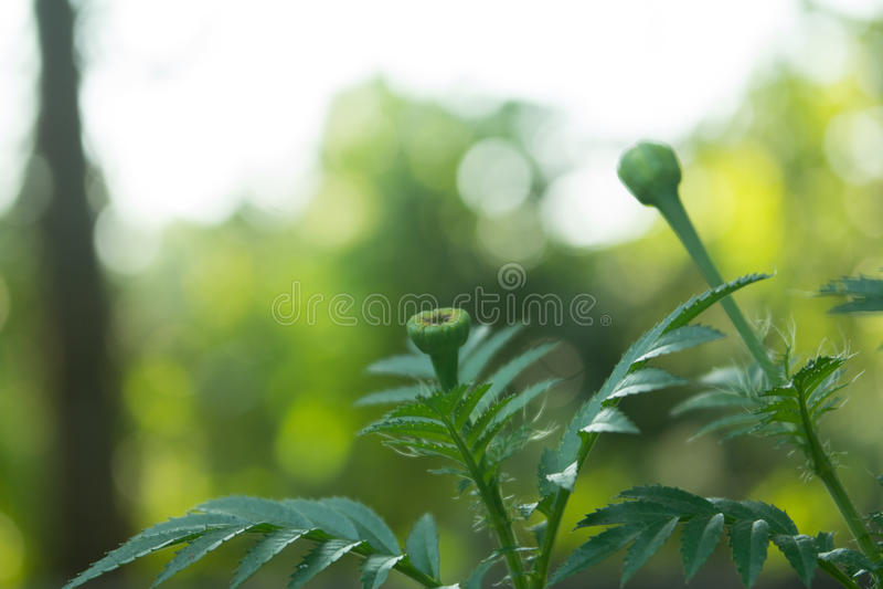 Árvore alegre natural do ouro foto de stock