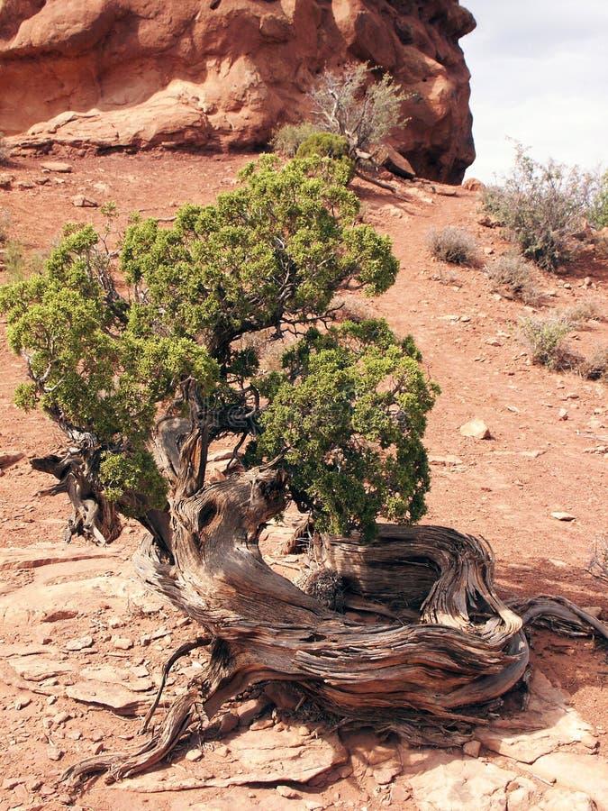 Árvore aleijada fotos de stock