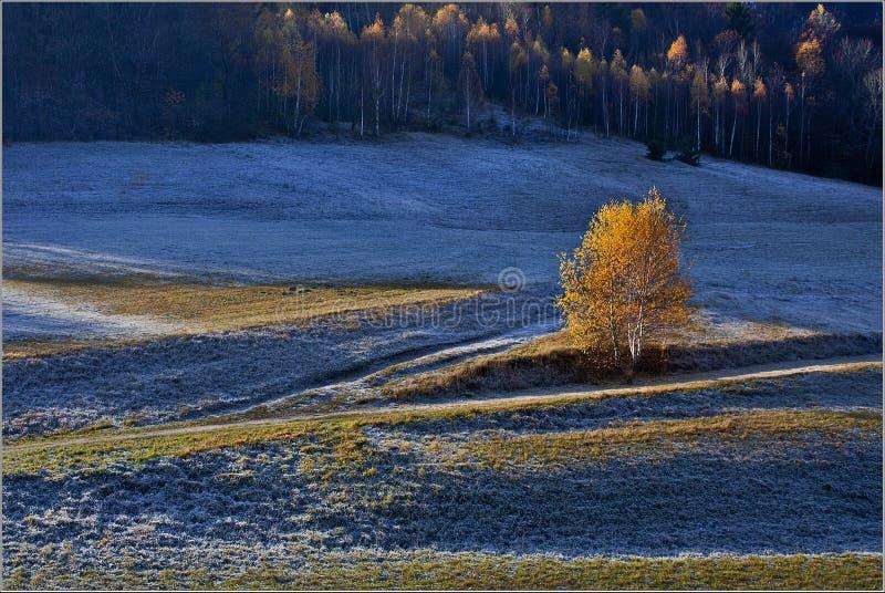 Árvore amarela imagem de stock