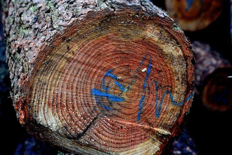 Árvore ameaçada com descrição azul, detalhe, corte, vista dianteira, foto foto de stock royalty free