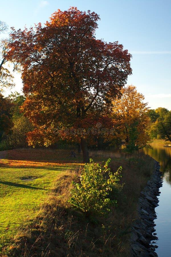 Árvore ao lado do canal no outono fotos de stock