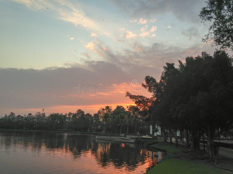 Árvore ao lado do lago fotografia de stock royalty free