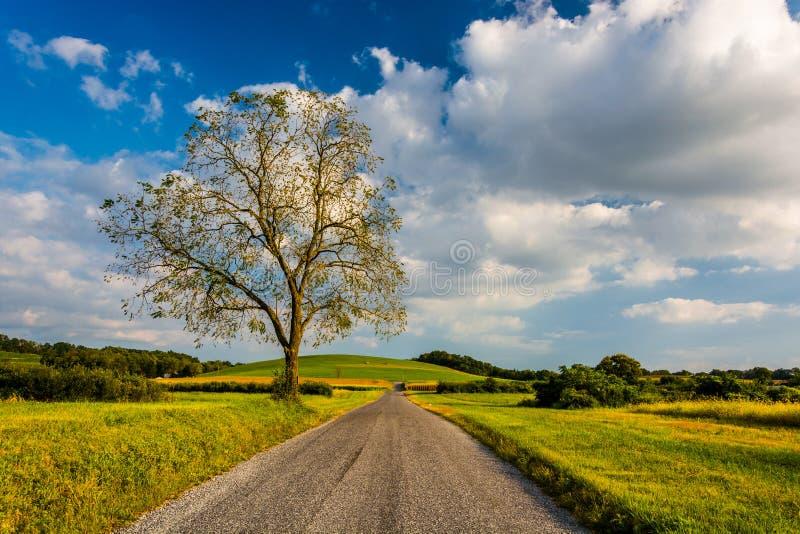 Árvore ao longo de uma estrada secundária perto do bosque da mola, Pensilvânia imagem de stock royalty free