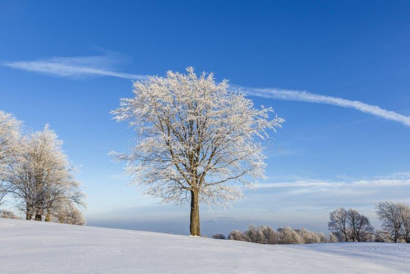 Árvore apenas congelada no monte e no céu azul com algumas nuvens fotos de stock royalty free