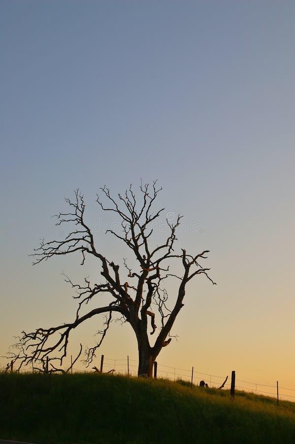 Árvore assustador foto de stock