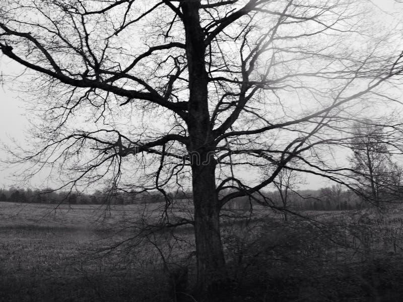 Árvore assustador imagens de stock
