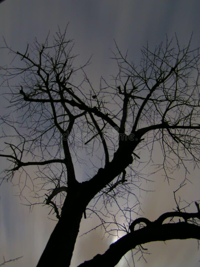 Árvore assustador na noite imagem de stock royalty free