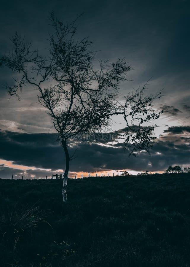 Árvore assustador na noite no distrito máximo imagem de stock