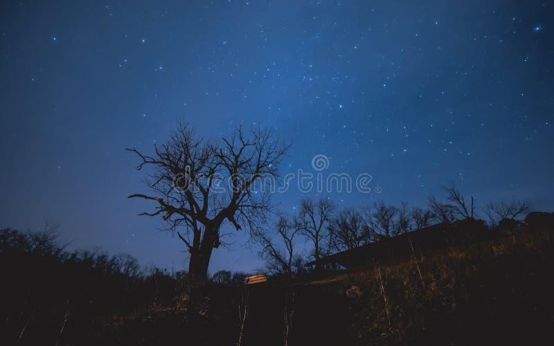 Árvore assustador sob você Céu nocturno imagem de stock royalty free