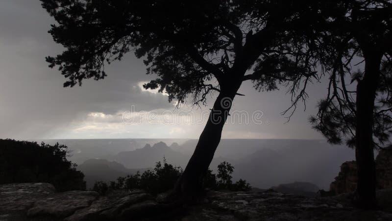 Árvore através do raio do sol fotos de stock royalty free