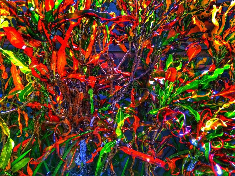 Árvore bali de Abstrak fotos de stock royalty free